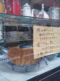 伊勢崎町の猫。